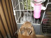 pig 20100812 001