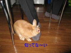 pig 20101029 001
