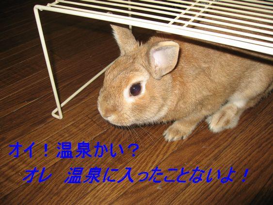 pig 20101106 001
