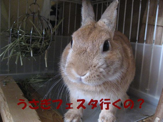 pig 20101126 003