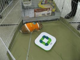 pig 20101127 005
