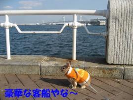 pig 20101127 011