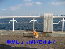 pig 20101127 012