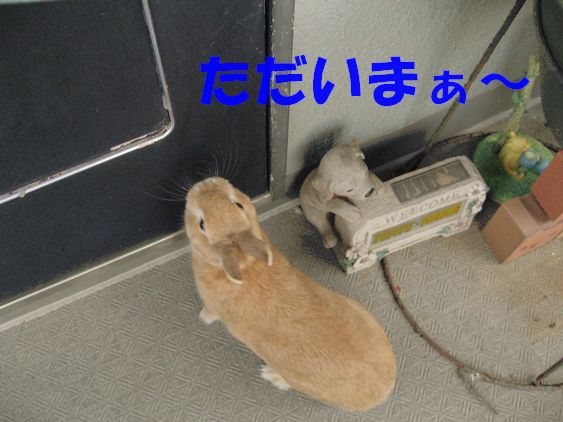 pig 20101129 001