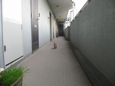 0709 一人散歩