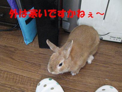 pig 20110102 001