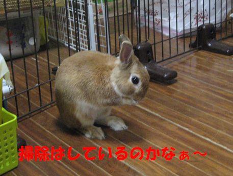 pig 20110124 001