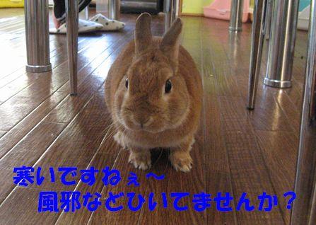 pig 20110127 001