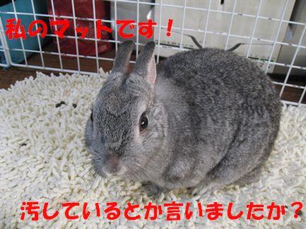 sa-ko 20110128 001