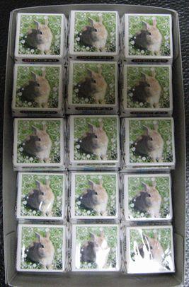 pig 20110129 001