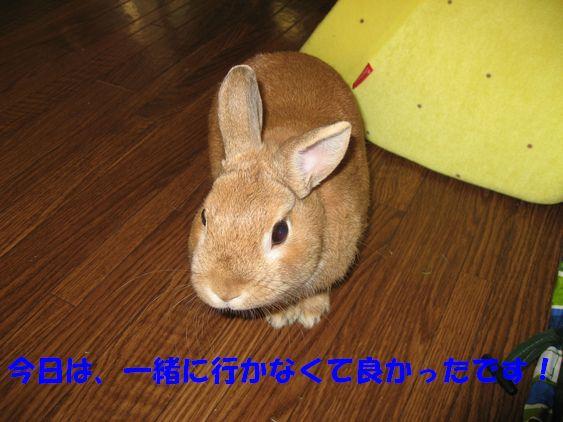 pig 20110130 001