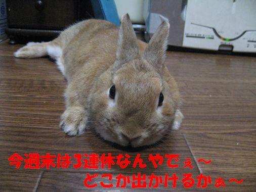 pig 20110207 001