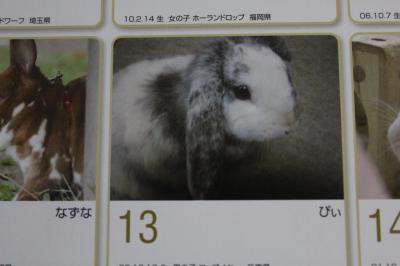 016_convert_20101210011240.jpg