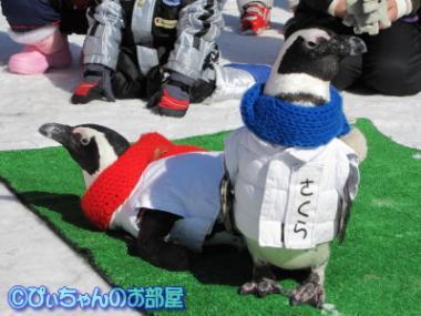 ペンギン♪