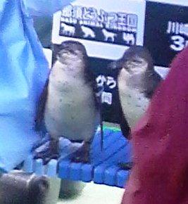 ペンギンさん乙