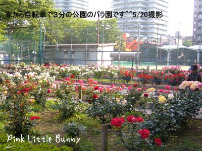11.5.21バラ園