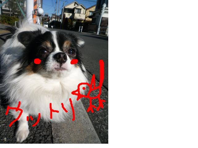 snap_pinksubmarine_20111414364.jpg