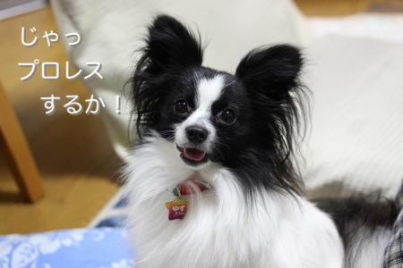 IMG_6605.jpg