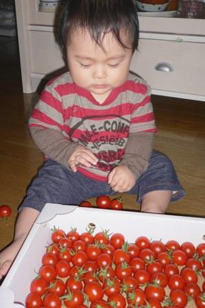 101005 息子初トマト。