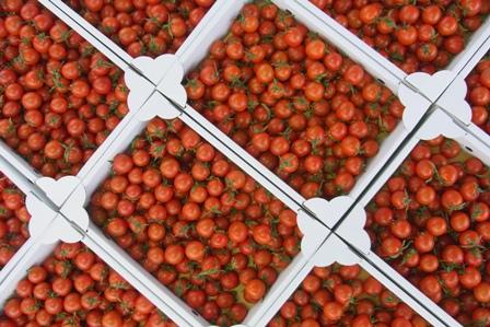 101120 tomato.