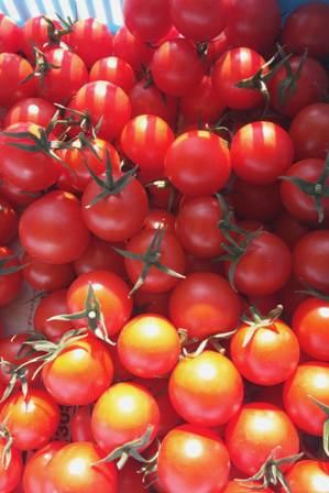 110106 tomato.