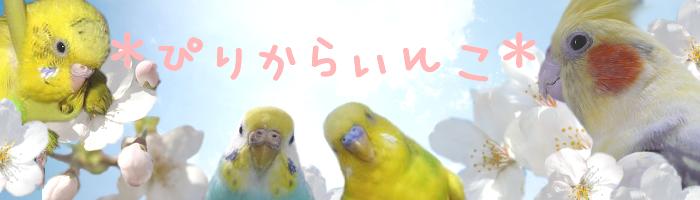 *ぴりからいんこ*