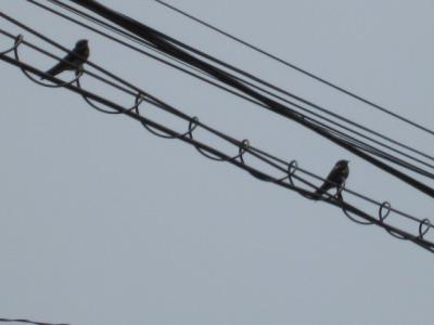 電線に。。。^^