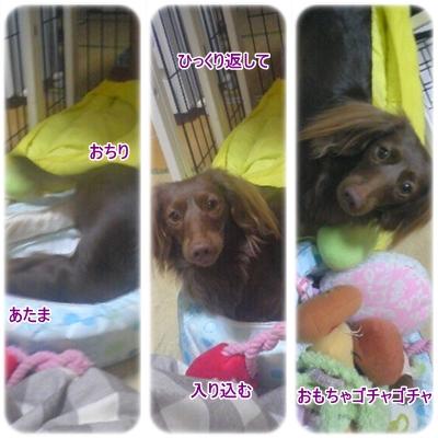 20100307_5.jpg