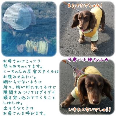 20100330_06.jpg