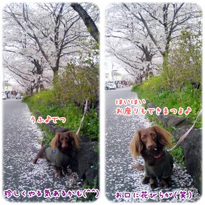 20100409_01.jpg