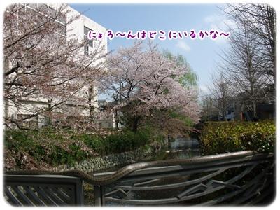 20100410_01.jpg