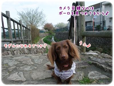 20100410_03.jpg