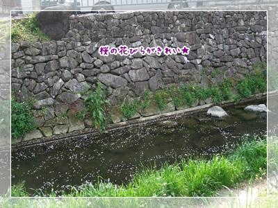 20100411_02.jpg