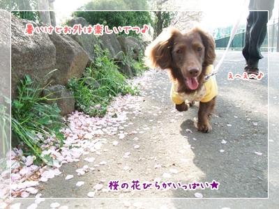 20100411_04.jpg