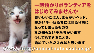 azukari_catA.jpg