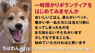 azukari_dogA.jpg