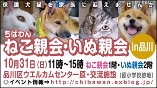 nekoinuoyakai20101031_320x180.jpg