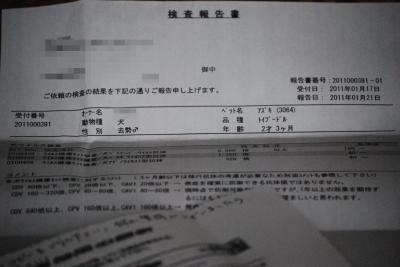 DSC_0994_convert_20110130172924.jpg