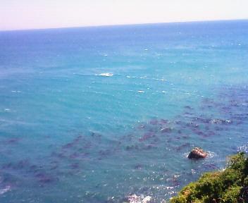 大崩海岸1