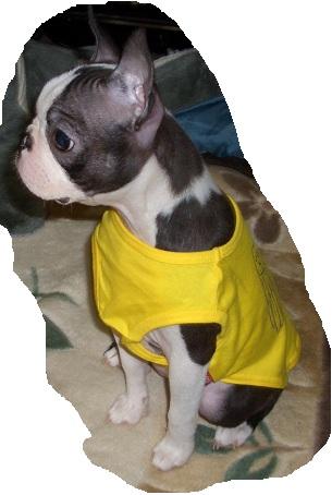 daria puppy3