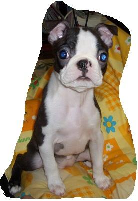 daria puppy5