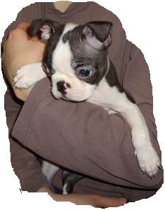 daria puppy6