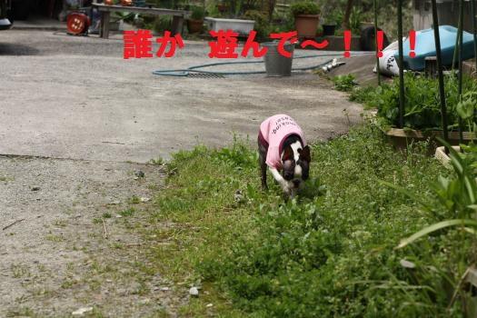 IMG_3256_convert_20100422210547.jpg
