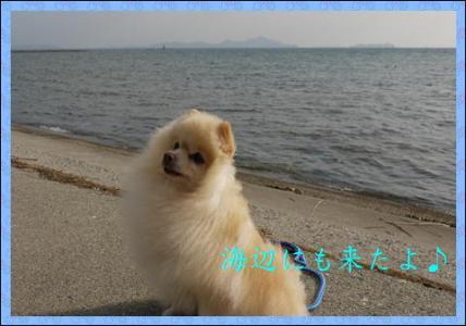 2010 海浜5