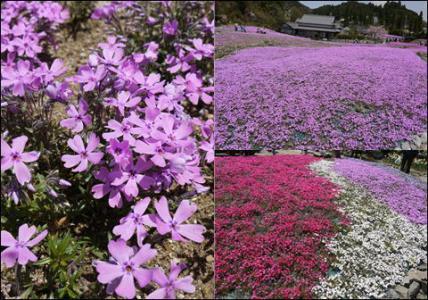 花のじゅうたん2