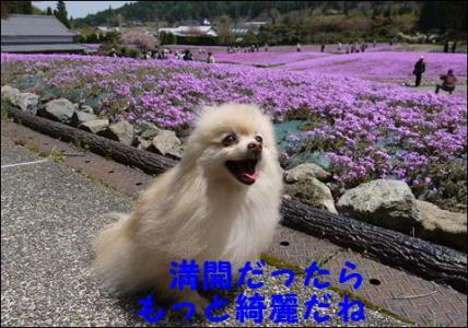 花のじゅうたん3