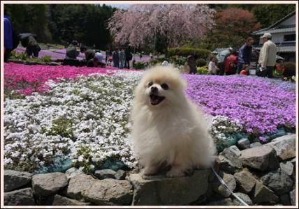 花のじゅうたん6