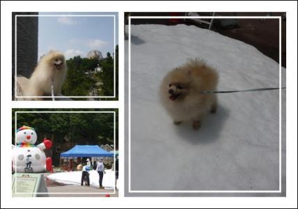 六甲 雪祭り