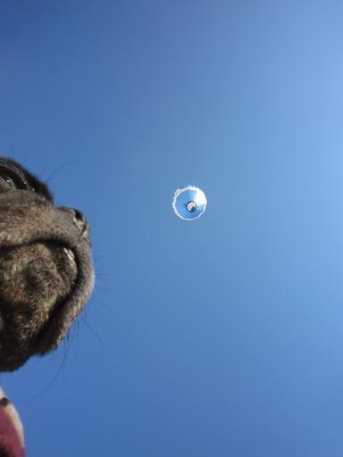 10この気球はスイスの人らしい