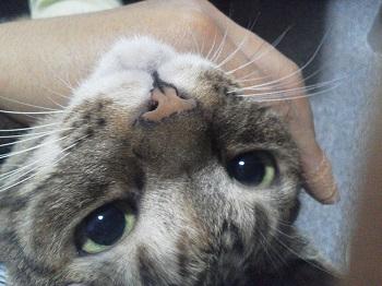 歯なしネコ